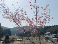 山里と紅桜