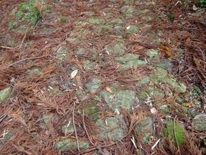 苔むす石畳