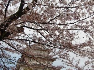 亥鼻城と桜
