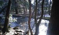 上賀茂神社の御手洗川