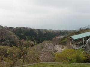 春の日本平