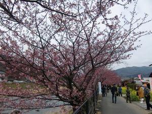 桜まつり会場で