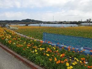 ファミリーパークの花畑