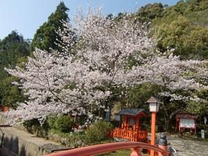 神倉神社・橋と桜