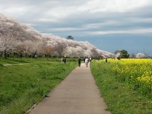 堤下の遊歩道