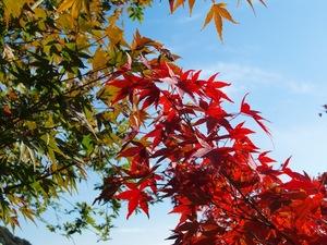 清水の紅葉